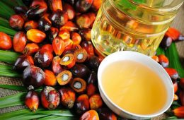 palm-oil-controversy-cosmetics