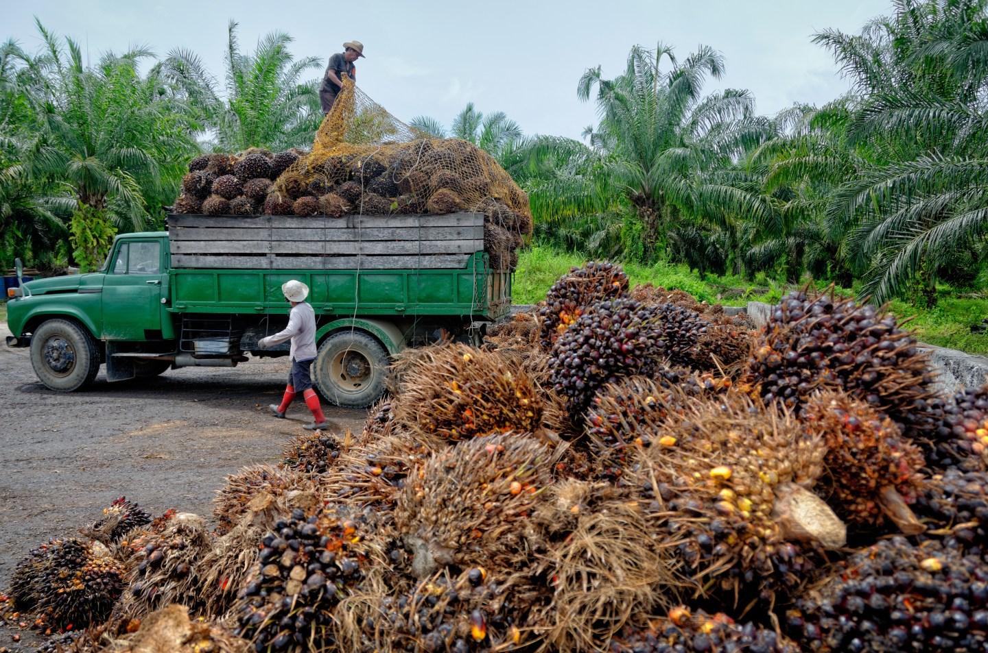 palm-oil-controversy-production